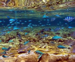 Reflections, Ningaloo Reef by Penny Murphy