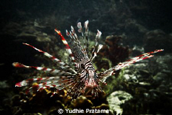 Lion Fish taken with olympus pen E-PL1 with sea&sea YS-110a by Yudhie Pratama