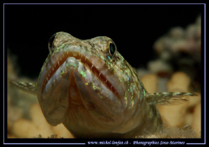 Lezard Fish by Michel Lonfat