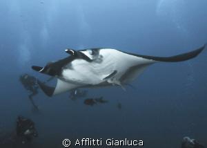manta by Afflitti Gianluca