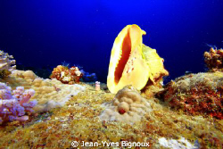 Lost seashell Mauritius by Jean-Yves Bignoux