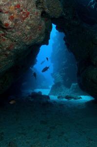 Cayman swim through & Tarpon by Paul Colley