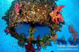 Sinkers is an old mooring buoy with a 25m long chain....p... by Mona Dienhart