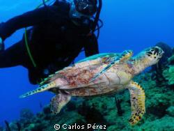 Hawksbill Diver @ El Natural Aguadilla PR; Manual Set by Carlos Pérez