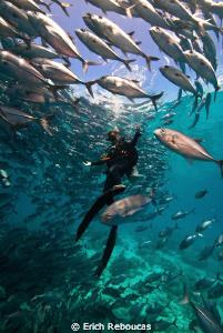 Diver and schooling jacks at Sipadan by Erich Reboucas