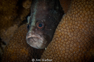 grumpy...soap fish by Jim Garber