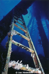 Looking up the ladder at the Salt Pier-Bonaire by Lisa Hinderlider