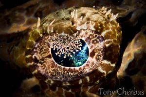 Crocodile Fish Eye by Tony Cherbas