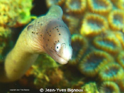 Geometric EEL ,EASY SUBJECT TO SHOOT ,tried differnt comp... by Jean-Yves Bignoux
