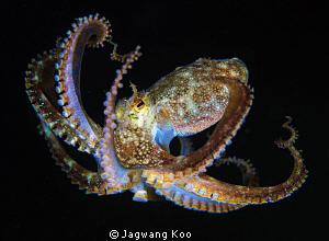 Octopus by Jagwang Koo