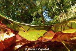 Summer Colors  by Roman Vyroubal