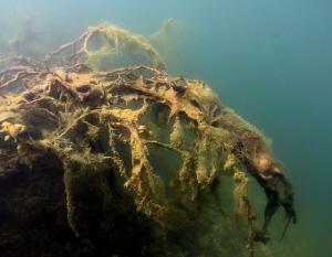 Underwater scene by Veronika Matějková