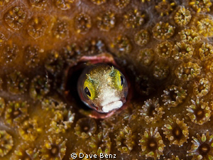 Hey...what´s up ??? by Dave Benz