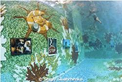 Underwater photoexibition in swimming pool... by Sergiy Glushchenko