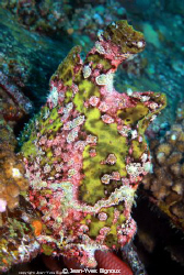 Frogfish Mauritius ,on a shipwreck Jean-Yves Bignoux ,Can... by Jean-Yves Bignoux