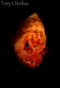 Mad Strawberry: I used Adobe Lightroom's graduated filter... by Tony Cherbas