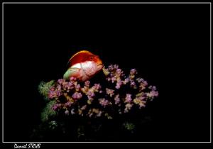 Last weeks dives in Masa Nakari :-D by Daniel Strub