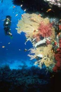 Diver + soft corals south Red Sea  by Hossam M. Nasef