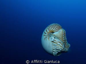 nautylus by Afflitti Gianluca