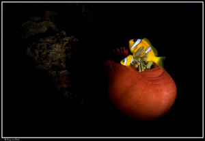 Finally a closed anemone with the snoot... by Dray Van Beeck