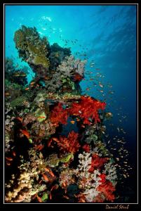 Reef life in Marsa Nakari :-D by Daniel Strub