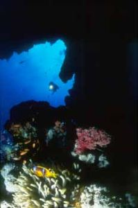 Diver + clown fish in a cave (double exp.) by Hossam M. Nasef
