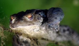 Series of frogs by Veronika Matějková