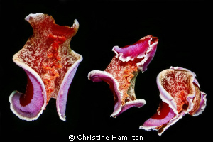 """A montage of a beautiful Spanish Dancer """"dancing"""" in the ... by Christine Hamilton"""