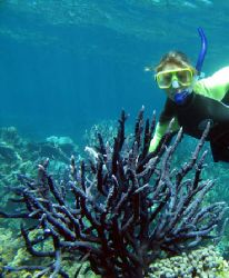My sister checking out blue staghorn coral, Ningaloo Reef... by Penny Murphy