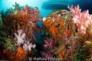 soft corals by Mathieu Foulquié