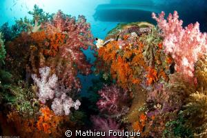 soft corals by Mathieu Foulquié
