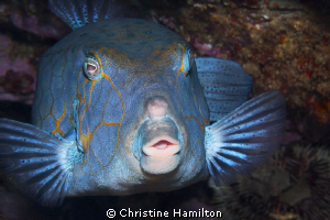 """""""A Face Only a Mother Could Love"""". Hard to believe that t... by Christine Hamilton"""