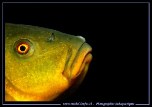 Tench portrait... :O)... by Michel Lonfat