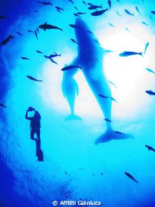 cetaceans......... by Afflitti Gianluca