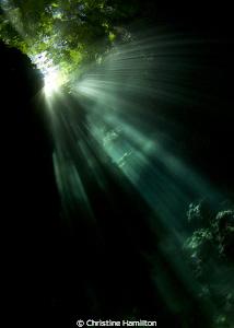Jungle Reflections by Christine Hamilton