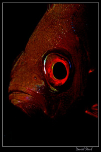 Red eye :-D by Daniel Strub
