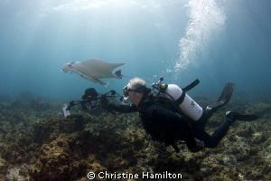 Shooting Mantas by Christine Hamilton
