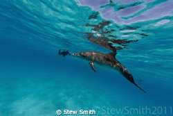 snorkelling with dolphins is so fun, but really hard work. by Stew Smith