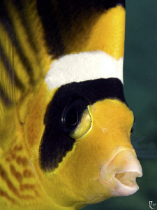 These days, I somehow like fish-portrait shots ;-) by Rico Besserdich