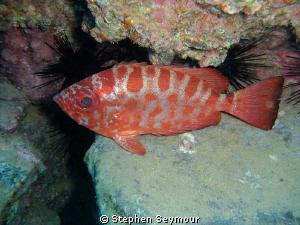 Glass eye Fish by Stephen Seymour