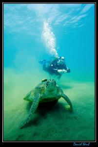 Buddy JC on his first tropical water dives in Marsa Abu D... by Daniel Strub