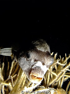 Found this fellow, on night dive North Reef Marsa Shagra.... by Maria Machin