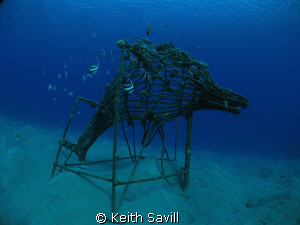 Dolphin shaped artifical reef with Bannerfish by Keith Savill