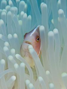 Nemo by Reidar Opem
