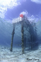 "Just the jetty of ""Buddy Dive Resort"" (Bonaire) by Raoul Caprez"