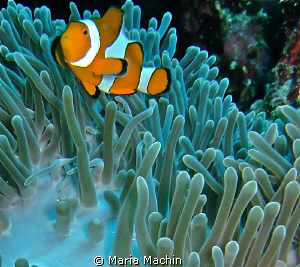 These little fish just wont keep still! by Maria Machin