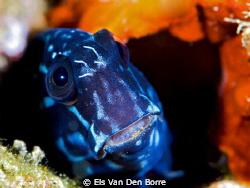 Close encounter by Els Van Den Borre
