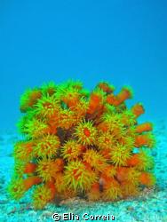 Beauty is a Coral! by Elia Correia