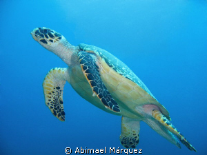 Happy turtle by Abimael Márquez