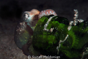 ... So the question is . . . do Octopii dream in color? by Suzan Meldonian